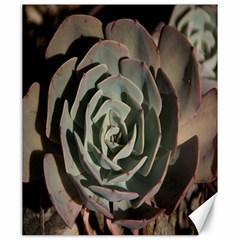Succulent Green Pink Rosettes Canvas 20  X 24   by Sapixe