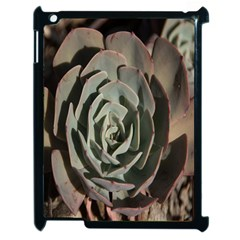 Succulent Green Pink Rosettes Apple Ipad 2 Case (black) by Sapixe