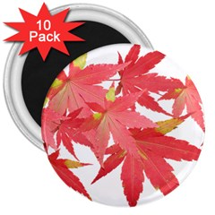Leaves Maple Branch Autumn Fall 3  Magnets (10 Pack)  by Sapixe