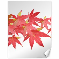 Leaves Maple Branch Autumn Fall Canvas 36  X 48   by Sapixe