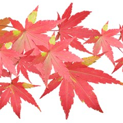 Leaves Maple Branch Autumn Fall Magic Photo Cubes by Sapixe