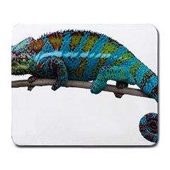 Reptile Lizard Animal Isolated Large Mousepads by Sapixe