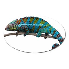 Reptile Lizard Animal Isolated Oval Magnet by Sapixe