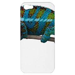 Reptile Lizard Animal Isolated Apple Iphone 5 Hardshell Case by Sapixe