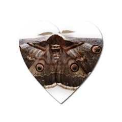 Night Butterfly Butterfly Giant Heart Magnet by Sapixe