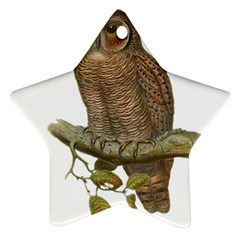 Bird Owl Animal Vintage Isolated Ornament (star) by Sapixe