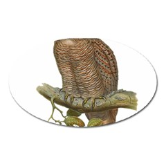 Bird Owl Animal Vintage Isolated Oval Magnet by Sapixe