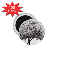 Nature Tree Blossom Bloom Cherry 1 75  Magnets (100 Pack)  by Sapixe