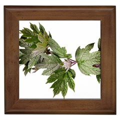 Leaves Plant Branch Nature Foliage Framed Tiles by Sapixe