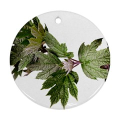 Leaves Plant Branch Nature Foliage Ornament (round) by Sapixe