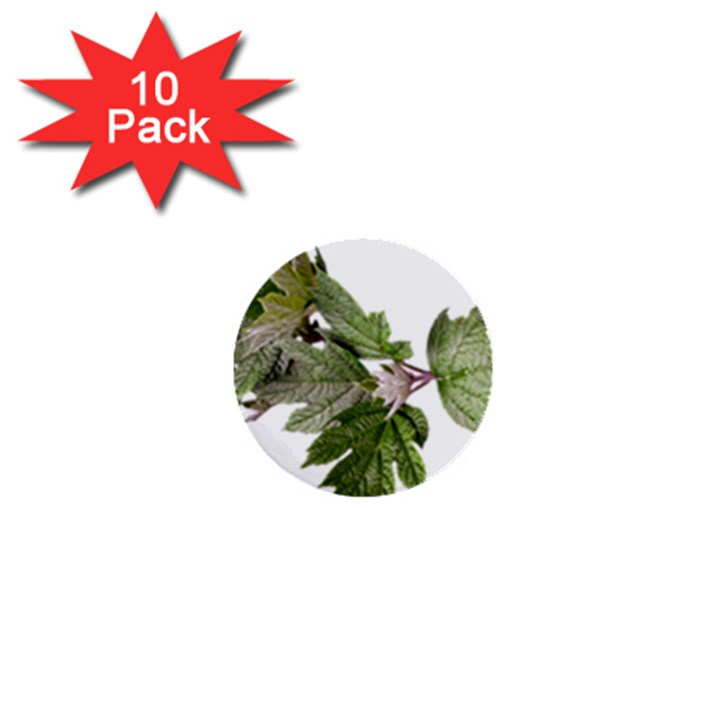 Leaves Plant Branch Nature Foliage 1  Mini Buttons (10 pack)