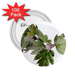 Leaves Plant Branch Nature Foliage 2 25  Buttons (100 Pack)  by Sapixe