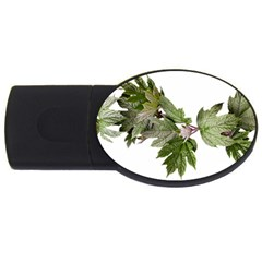 Leaves Plant Branch Nature Foliage Usb Flash Drive Oval (4 Gb)