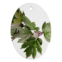 Leaves Plant Branch Nature Foliage Oval Ornament (two Sides) by Sapixe