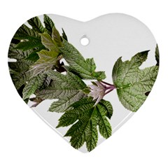 Leaves Plant Branch Nature Foliage Heart Ornament (two Sides) by Sapixe