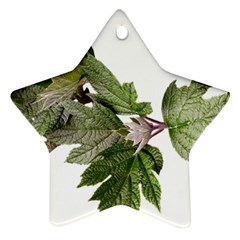 Leaves Plant Branch Nature Foliage Star Ornament (two Sides) by Sapixe