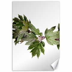 Leaves Plant Branch Nature Foliage Canvas 12  X 18   by Sapixe