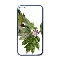 Leaves Plant Branch Nature Foliage Apple Iphone 4 Case (black) by Sapixe