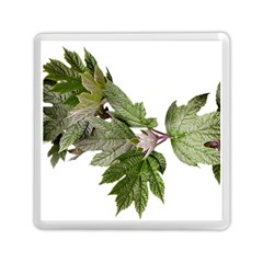 Leaves Plant Branch Nature Foliage Memory Card Reader (square)  by Sapixe
