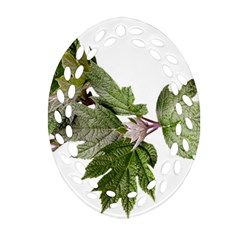 Leaves Plant Branch Nature Foliage Oval Filigree Ornament (two Sides) by Sapixe