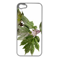 Leaves Plant Branch Nature Foliage Apple Iphone 5 Case (silver) by Sapixe