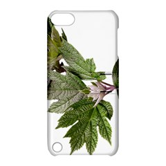 Leaves Plant Branch Nature Foliage Apple Ipod Touch 5 Hardshell Case With Stand