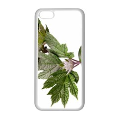 Leaves Plant Branch Nature Foliage Apple Iphone 5c Seamless Case (white) by Sapixe
