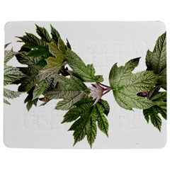 Leaves Plant Branch Nature Foliage Jigsaw Puzzle Photo Stand (rectangular) by Sapixe