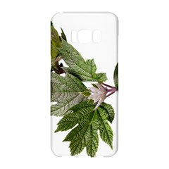 Leaves Plant Branch Nature Foliage Samsung Galaxy S8 Hardshell Case  by Sapixe