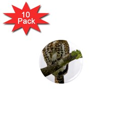 Owl Bird 1  Mini Magnet (10 Pack)