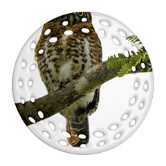 Owl Bird Round Filigree Ornament (two Sides) by Sapixe