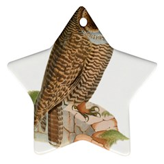 Bird Owl Animal Vintage Isolated Star Ornament (two Sides) by Sapixe