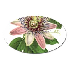 Passion Flower Flower Plant Blossom Oval Magnet by Sapixe