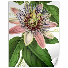 Passion Flower Flower Plant Blossom Canvas 12  X 16   by Sapixe