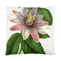 Passion Flower Flower Plant Blossom Standard Cushion Case (two Sides) by Sapixe