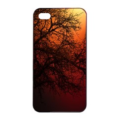 Sunset Silhouette Winter Tree Iphone 4/4s Seamless Case (black)
