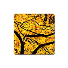 Golden Vein Square Magnet by FunnyCow