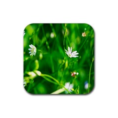 Inside The Grass Rubber Square Coaster (4 Pack)