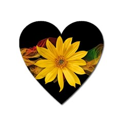 Sun Flower Blossom Bloom Particles Heart Magnet by Nexatart