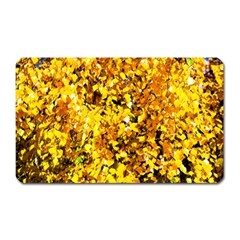 Birch Tree Yellow Leaves Magnet (rectangular) by FunnyCow