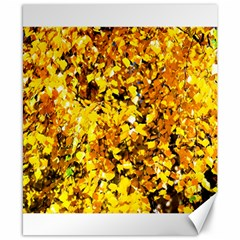 Birch Tree Yellow Leaves Canvas 8  X 10  by FunnyCow