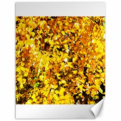 Birch Tree Yellow Leaves Canvas 12  X 16   by FunnyCow