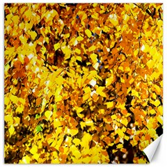 Birch Tree Yellow Leaves Canvas 20  X 20   by FunnyCow