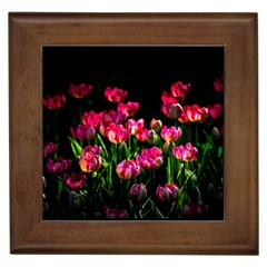 Pink Tulips Dark Background Framed Tiles by FunnyCow