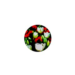 White And Red Sunlit Tulips 1  Mini Buttons by FunnyCow