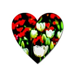White And Red Sunlit Tulips Heart Magnet by FunnyCow