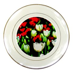 White And Red Sunlit Tulips Porcelain Plates by FunnyCow