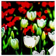 White And Red Sunlit Tulips Canvas 12  X 12   by FunnyCow