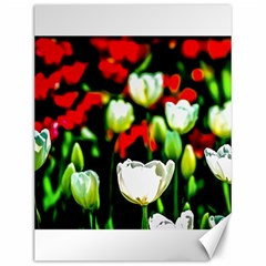 White And Red Sunlit Tulips Canvas 12  X 16   by FunnyCow