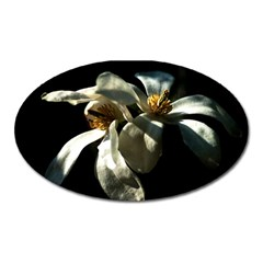 Two White Magnolia Flowers Oval Magnet by FunnyCow